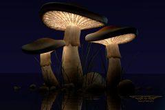 JMR-Mushrooms-1920x1080W
